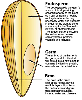 Parts of Whole Grains